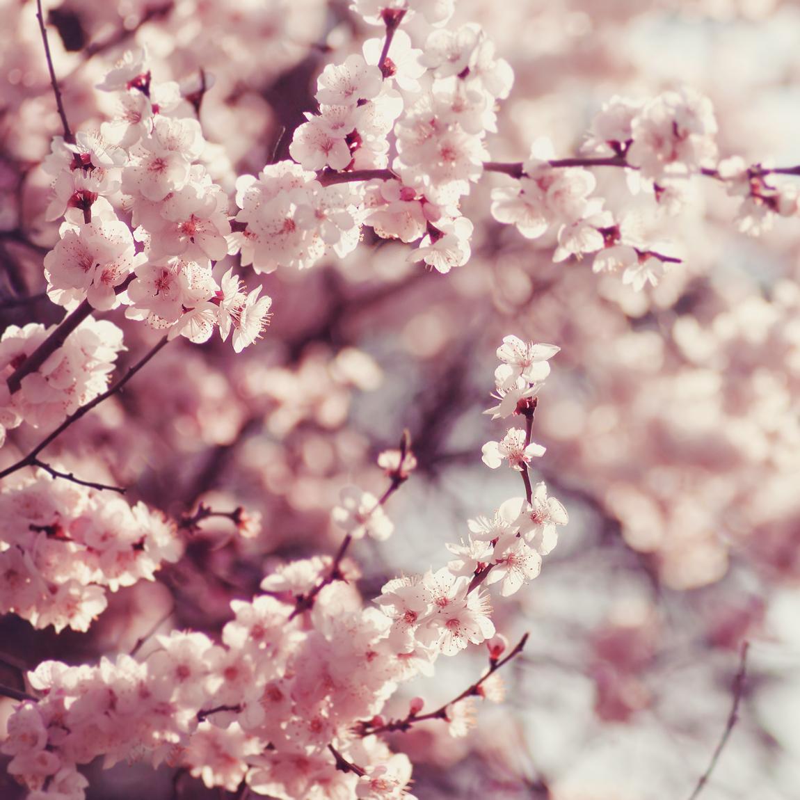 Makeup di primavera ispirato ai fiori di ciliegio.